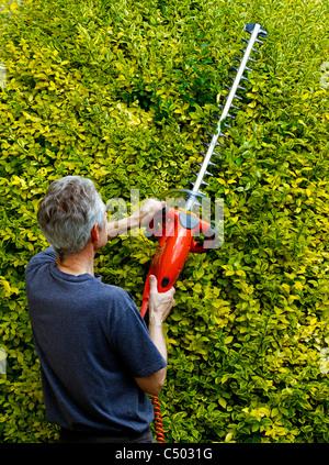 Older man using hedge trimmer UK - Stock Photo
