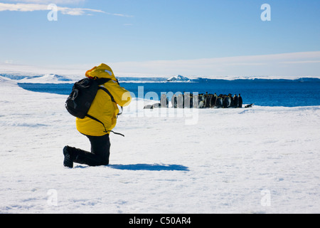 Tourists photographing Emperor Penguins on ice, Snow Hill Island, Antarctica - Stock Photo