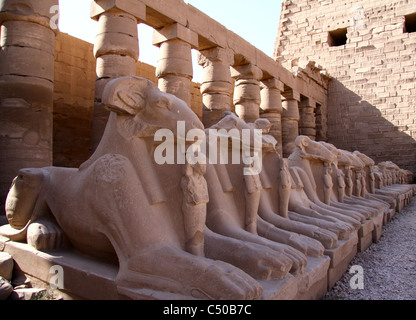 The Rams of the karnak  temple. resting on the sides of the first court of the temple . - Stock Photo