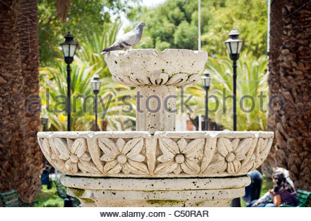 A pigeon sitting on a white stone fountain in Plaza de Yanahuara, Arequipa, Peru. - Stock Photo