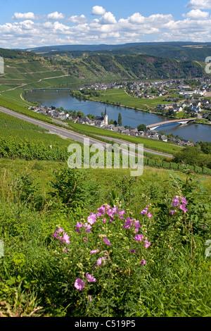 Piesport an der Mosel, Mittelmosel Rheinland-Pfalz Deutschland, Moselle river Rhineland-Palatinate Germany - Stock Photo