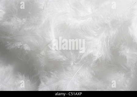 close-up of white feathers - Stock Photo