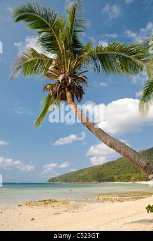 Beach with palm trees, Pulau Redang island, Malaysia, Southeast Asia, Asia - Stock Photo
