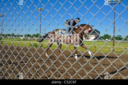 Horse Racing Lethbridge