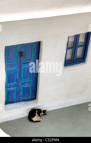 Thira on iconic Greek island of Santorini, typical Greece, pet cat sleeps in the midday heat white washed building - Stock Photo