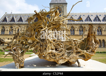 Tree roots in Ghost Forest exhibition at Oxford University's Museum of Natural History and the Pitt Rivers Museum, - Stock Photo