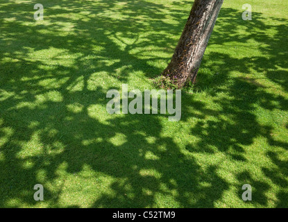 shadow of tree on green grass lawn - Stock Photo