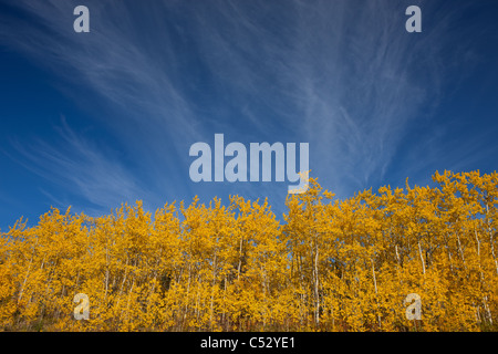 View of scenery and yellow Aspen trees along the Alaska Highway between Haines and Haines Junction, Yukon Territory, - Stock Photo
