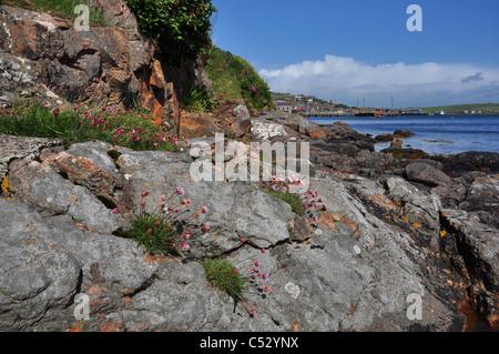 Rocks near  Stromness town, Mainland, Orkney, Scotland. - Stock Photo