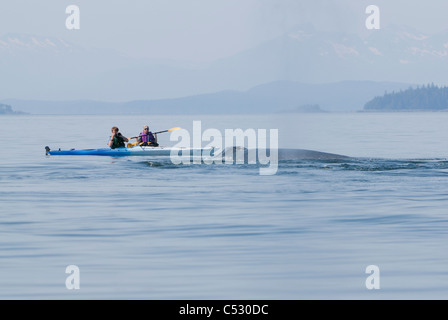 Humpback whale surfaces near sea kayakers in Frederick Sound, Inside Passage, Southeast Alaska, Summer - Stock Photo