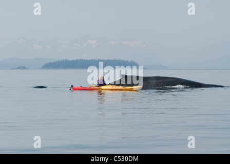 Humpback whale surfaces near a woman sea kayaker in Frederick Sound, Inside Passage, Southeast Alaska, Summer - Stock Photo