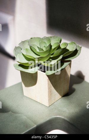 Close-up of a succulent plant growing in a pot - Stock Photo