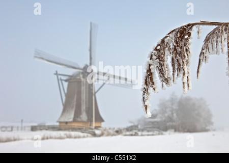 The Netherlands, Workum, Windmill in snow landscape. - Stock Photo