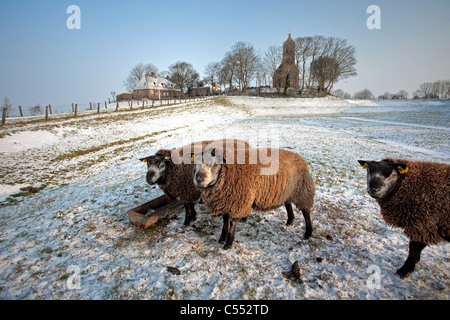 The Netherlands, Hogebeintum, Church on mound and sheep  in snow. - Stock Photo