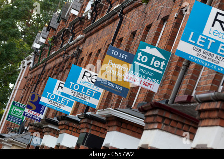 signs for property to let near Queen's University Belfast, Northern Ireland, UK - Stock Photo