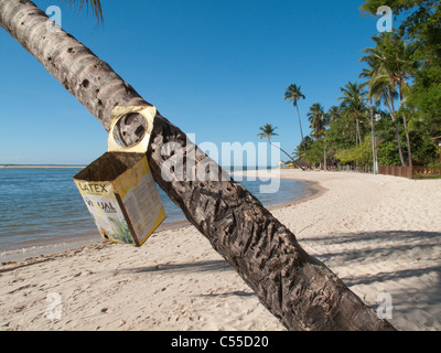 Litter bin hanging from palm tree on beach at Boipeba Island, Bahia, Brazil - Stock Photo