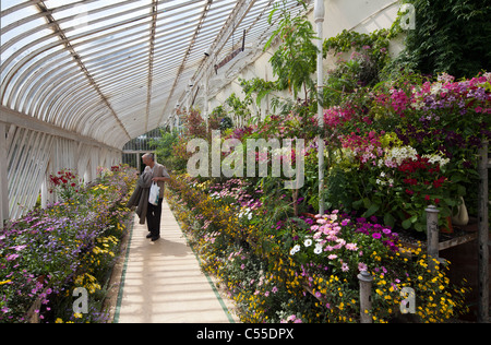 Palm House, Botanic Gardens, Belfast, Northern Ireland, UK - Stock Photo