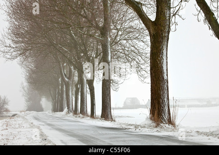 The Netherlands, Garrelsweer, Trees in snow along country road. - Stock Photo