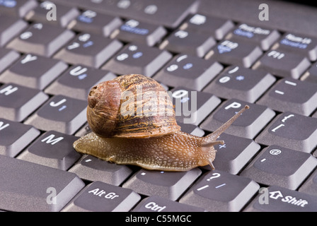 Common brown snail on computer keyboard. - Stock Photo