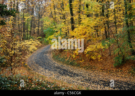 A Curving Asphalt Road Through A Lush And Colorful Park In Autumn, Southwestern Ohio, USA - Stock Photo