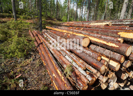 Small pile of freshly cut spruce ( picea abies ) logs , Finland - Stock Photo