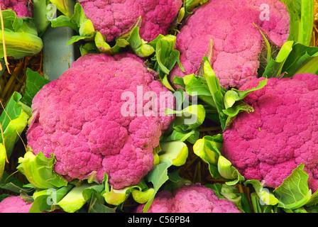 Blumenkohl - Cauliflower 03 - Stock Photo