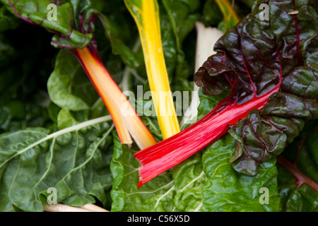 Rainbow chard for sale at Winchester Farmers Market, Hampshire - Stock Photo