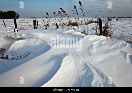 The Netherlands, Staphorst, Winter, Snowmound in field. Geese flying. - Stock Photo