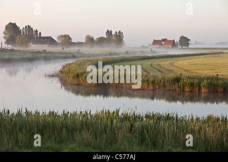 The Netherlands, Ossenzijl, Farm and horses in morning mist. - Stock Photo