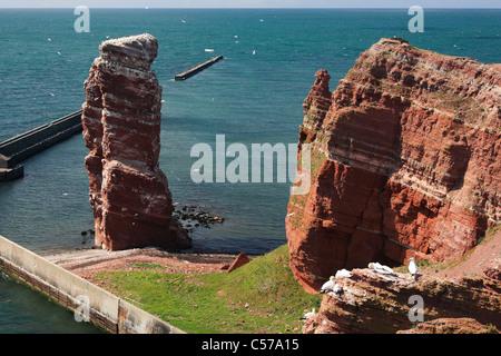 bird rock with landmark 'Lange Anna' ('High Anna') on island Helgoland (Heligoland) - Stock Photo