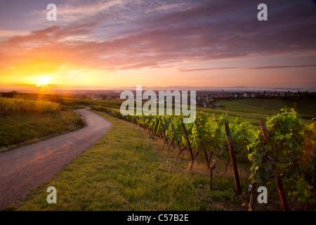 Sunrise over vineyards along the famous Route des Vins near Zellenberg, Alsace France - Stock Photo