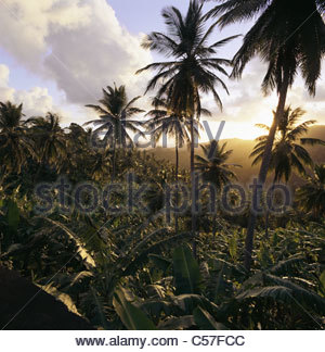 Palm trees in rural landscape - Stock Photo