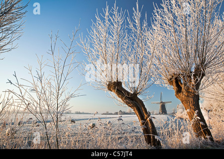 The Netherlands, Nigtevecht, Sheep and windmill in snow. Willow trees. - Stock Photo