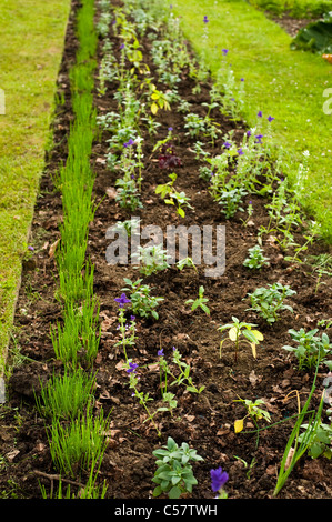 Newly planted mixed border at Painswick Rococo Garden, Gloucestershire, England, United Kingdom - Stock Photo