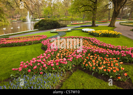The Netherlands, Lisse, Keukenhof flower garden, mainly Tulip. - Stock Photo