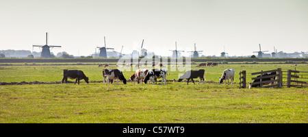 The Netherlands, Kinderdijk, Windmills, Unesco World Heritage Site. Cows in meadow. - Stock Photo