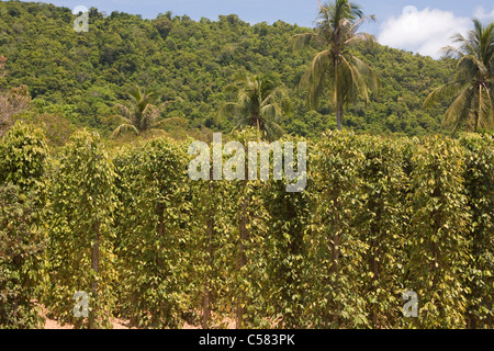 Cultivation surface, cultivation surfaces, Asia, outside, destination, destinations, outside, scenery, agriculture, - Stock Photo