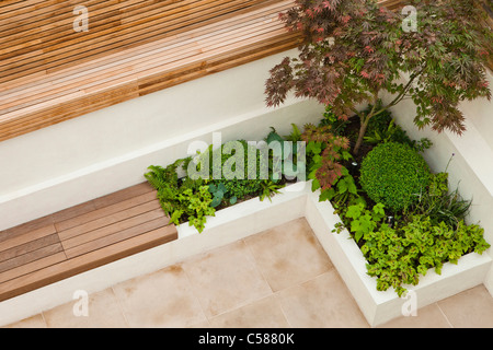 Corner detail of a compact patio garden with hard features. Raised, walled bed planted with acer, box heuchera and - Stock Photo