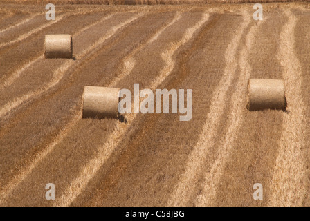 hay bales on a field - Stock Photo