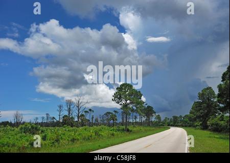 Storm clouds, building up, Merritt Island, National Wildlife Refuge, Florida, USA, United States, America, road - Stock Photo