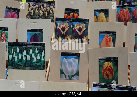 Packed tulip bulbs for sale at Flower Market in Amsterdam - Stock Photo