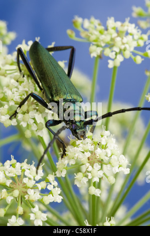 Beetle sitting on the flower. Close up shot. - Stock Photo