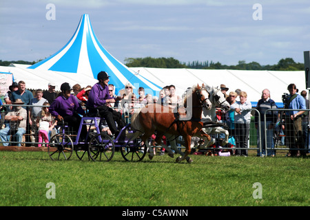 Scurry racing at Cheshire game and country show at Cheshire Show Ground Tabley Cheshire England - Stock Photo