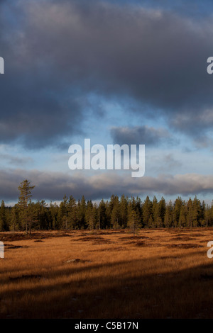 Landscape with fir trees in the background below cloudy sky at Dalarna, Sweden - Stock Photo