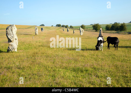 Standing stones of the West Kennet Avenue approaching Avebury, Wiltshire, England - Stock Photo