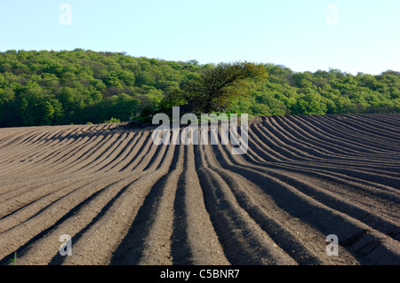 Newly plowed agricultural fields with trees in the background - Stock Photo