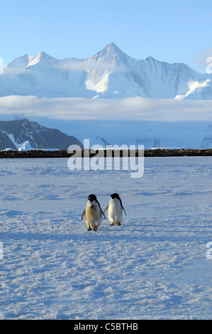Mount Herschel from Cape Hallett northern Ross Sea Antarctica - Stock Photo