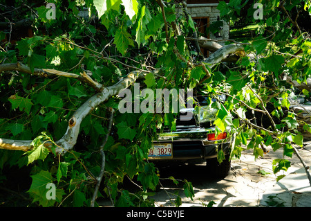 Storm damaged vehicle with downed tree crushing the roof. - Stock Photo
