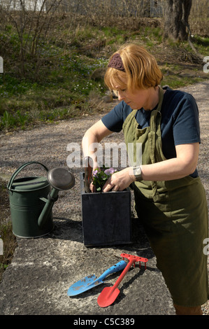 Side view of a woman in apron planting pansies - Stock Photo