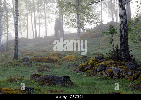 View of a scenic forest in the morning mist - Stock Photo